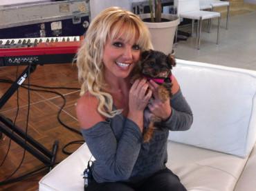 Britney Spears ha una nuova cagnetta: HANNAH