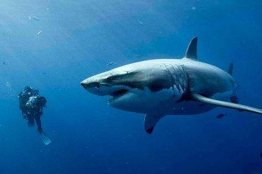 47 metri, poster e trailer italiano per l'horror con Mandy Moore tra gli squali