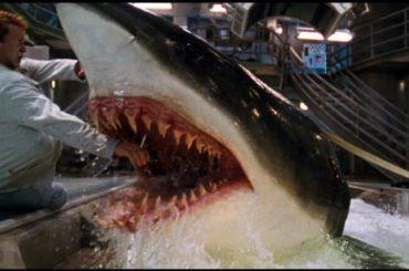Uomo tutto nudo si fa il bagno nella vasca degli squali – i video