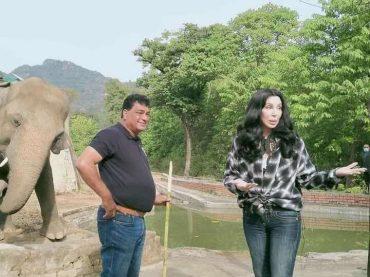 """Cher come Sheena: ha salvato """"l'elefante più solo al mondo"""""""